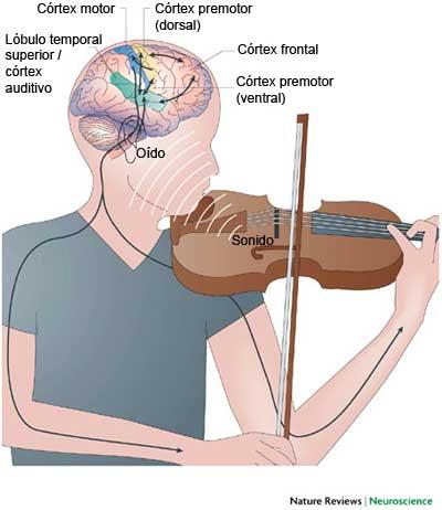 Como afecta la musica al cerebro